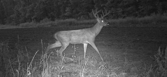 Missouri deer hunting reaches crossroads