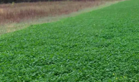 Food Plots: Time to Frost Seed