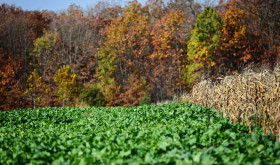 Developing a SUCCESSFUL New Food Plot