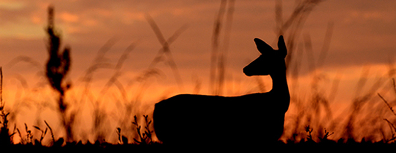 How Much Venison Do Hunters Harvest?