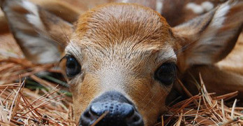 QDMA: The Magic & Myths of Fawns